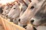 Custo de produção da pecuária de leite ficou praticamente estável em dezembro