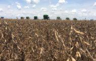 MNP participa do lançamento oficial da colheita da safra de soja