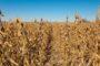 Cargill: incertezas no comércio global podem afetar investimentos
