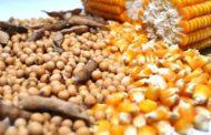 Em 10 anos, produção de soja e milho de MS deve aumentar em 6,5 milhões de toneladas