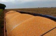 Antes de terminar colheita, produtores já comercializaram 40% da produção