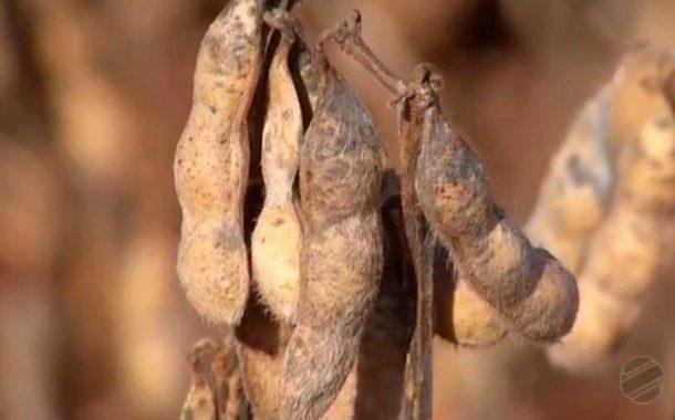 Produção recorde de soja deve garantir aumento de receita da agropecuária em MS em 2018