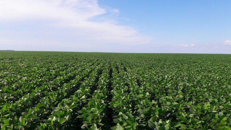 Apesar de incertezas, Brasil deve plantar recorde de 36,3 mi ha de soja em 18/19, apontam analistas