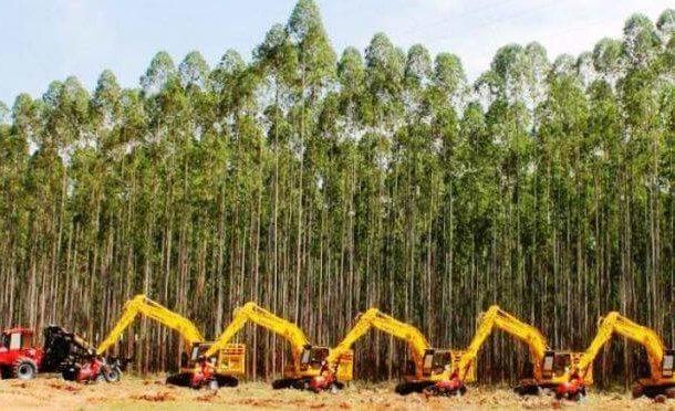 Mato Grosso do Sul tem a 2ª maior área plantada com eucalipto do país, diz IBGE