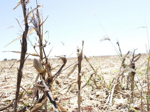Plantio da safra 2018/19, começa dia 15 e área ocupada com soja será maior em MS