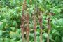 Pesquisadores dão dicas para evitar doenças de solo no cultivo de soja