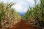 Produção de etanol cresce 60% no Estado