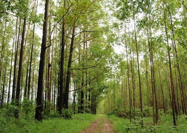 Ministério abre consulta pública para programa de florestas plantadas