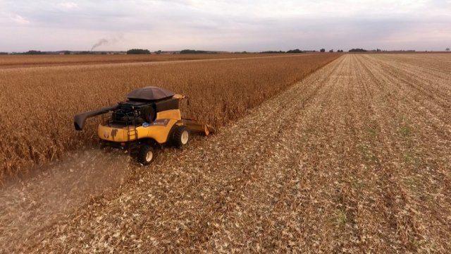 MS tem dois municípios entre os 20 maiores produtores de soja do país