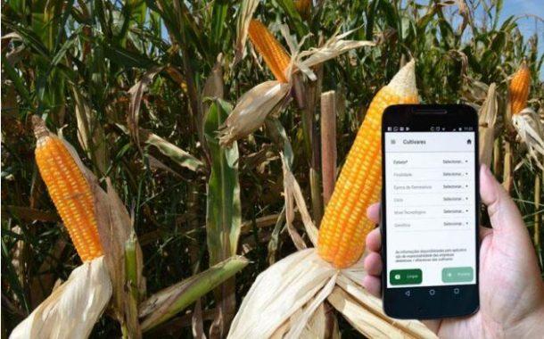 Aplicativo ajuda agricultor a escolher as cultivares de milho mais adequadas
