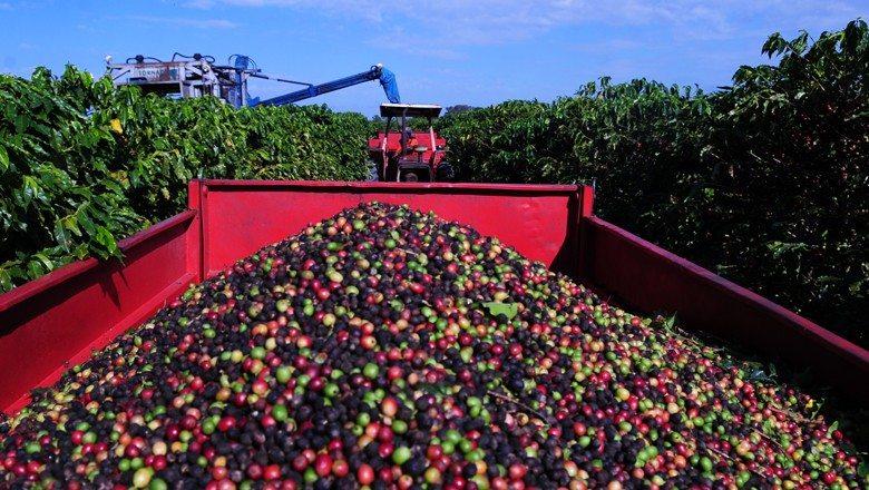 Brasil embarca 37% mais café em setembro