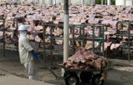 China deve habilitar mais plantas do Brasil para exportação de carnes