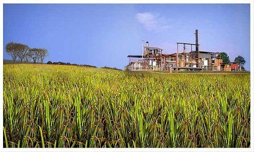Geração de energia elétrica de biomassa aumenta 58% em MS