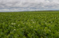 Entidades do agronegócio apresentam resultados do Soja Plus, em Campo Grande