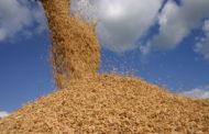 Brasil deve exportar 1,5 mi de toneladas de arroz