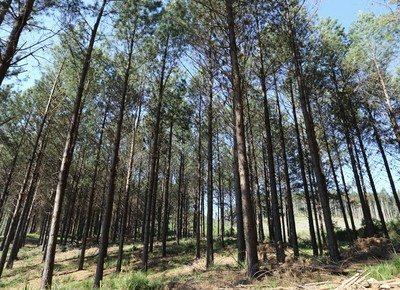 Mapa quer 2 milhões de hectares a mais de florestas em até 10 anos