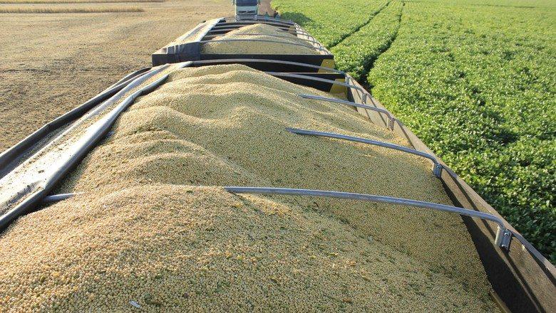 Sojicultor pode economizar até R$ 4 bi com manejo integrado de pragas