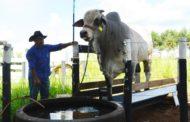 Com novas tecnologias, produtor já pode controlar virtualmente do plantio da safra a engorda do gado