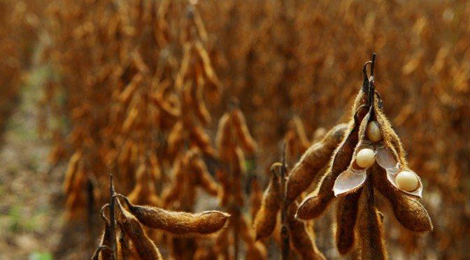 Prazo para cadastro da soja encerra amanhã, 10 de janeiro