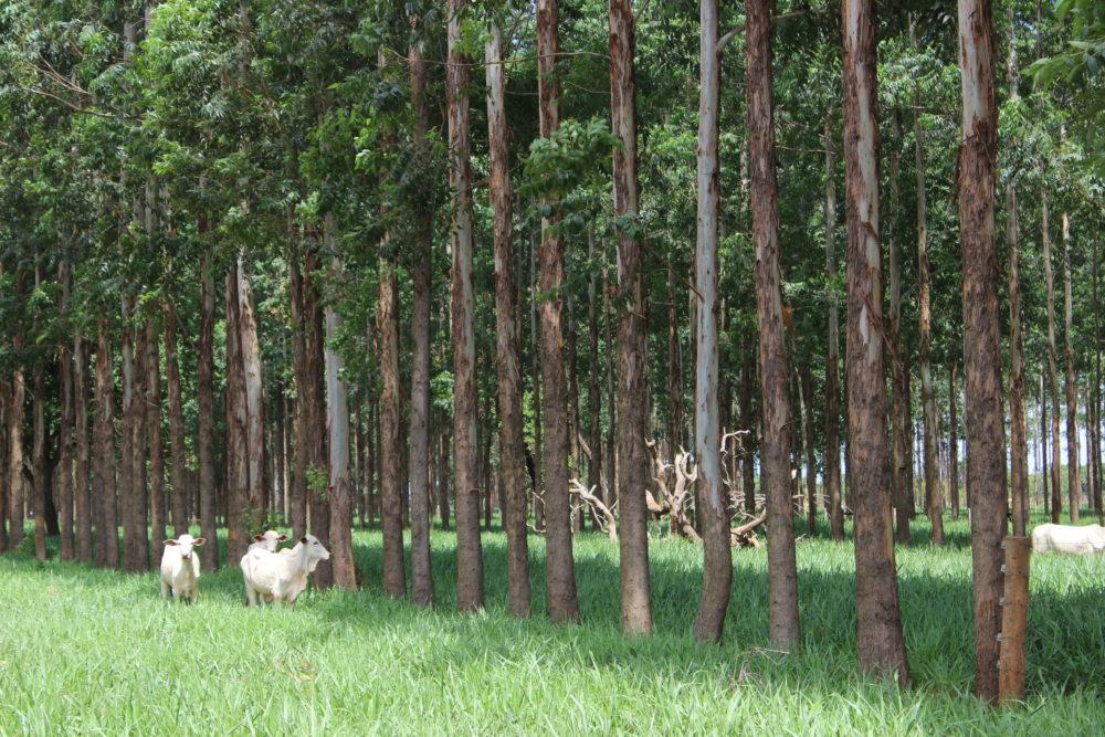 Produtores fundam associação de produtores de carne carbono neutro