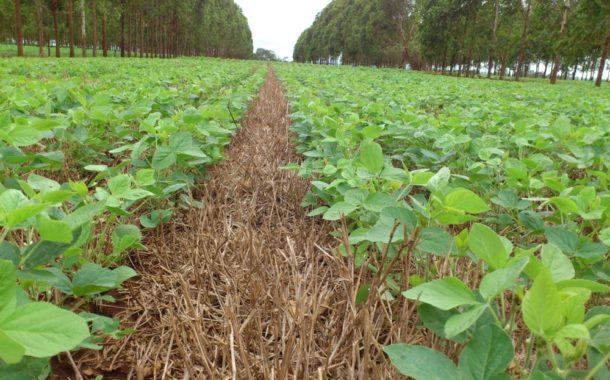 Expansão de cultivos em regiões do MS pode favorecer próximas colheitas no estado