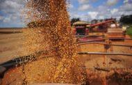 Colheita de soja atinge 88,9% da área, diz Datagro
