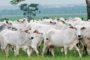 Potencial de exportação de carne em maio é de 150,4 mil toneladas