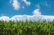 SIGA revê estimativa da 'safrinha' e confirma previsão de segunda maior produção de milho da história de MS
