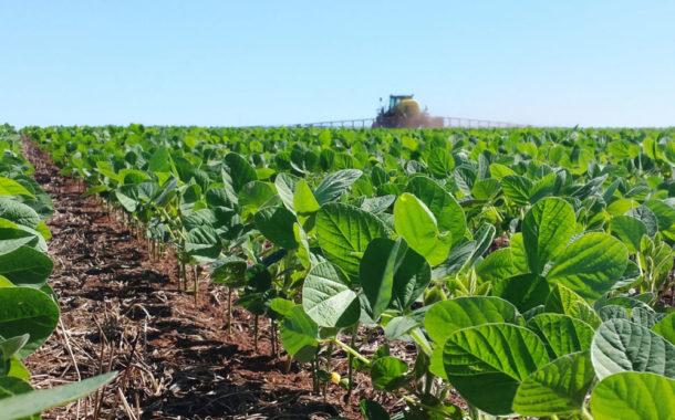 Área dedicada à soja cresce mais de 20% na região de Campo Grande