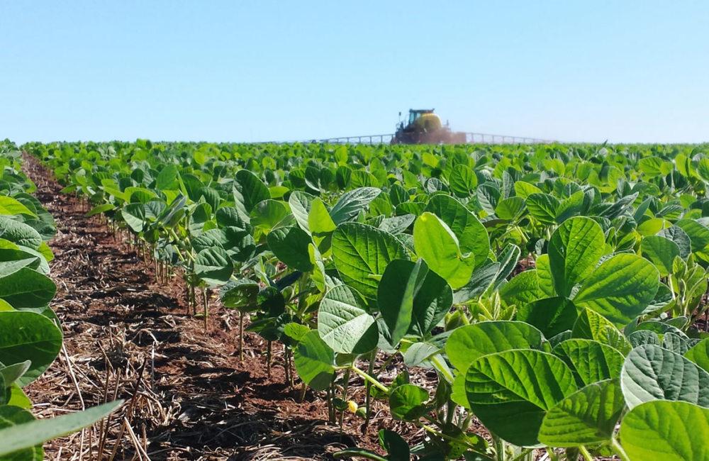 Vazio Sanitário da soja começa dia 15 de junho em Mato Grosso do Sul