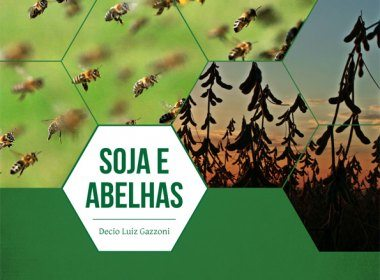 Proximidade entre agricultores e apicultores pode aumentar produtividade da soja em 10% e elevar produção de mel