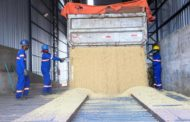 Brasil negocia milhões de toneladas de soja em poucos dias, com demanda chinesa e dólar alto
