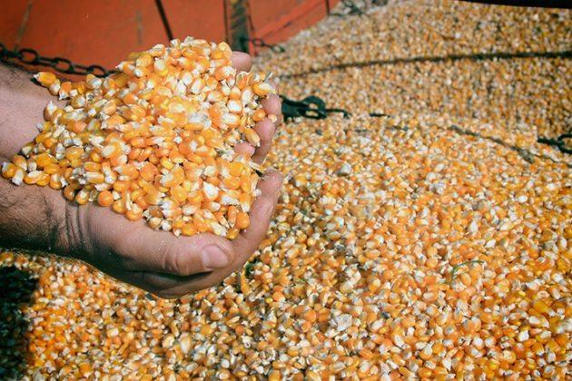 Expectativas para as produções de milho e soja no Brasil