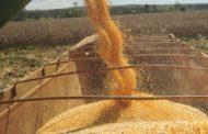 Cresce produção de milho segunda safra no Paraná e Mato Grosso do Sul