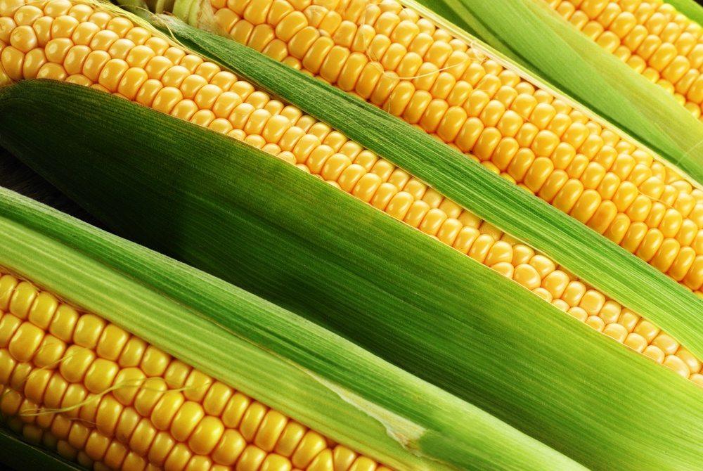 Colheita da 2ª safra de milho no Centro-Sul atinge 19% da área
