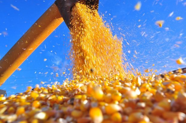 Exportação de milho continua em alta e soma US$ 1,1 bi em setembro