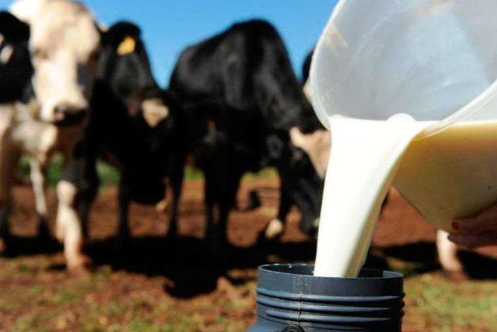 Reunidos em grupos, produtores de leite elencam benefícios