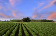 Brasil faz uso de defensivos agrícolas em apenas 8% de sua área, diz estudioso