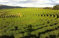 Brasil bateu recorde com exportação de café na safra 2018/2019