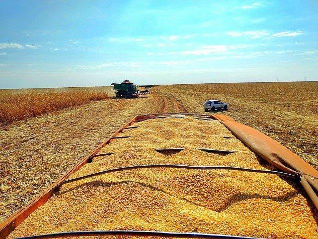 Conab aumenta estimativa e produção de grãos no Brasil deve alcançar 241,3 milhões de toneladas