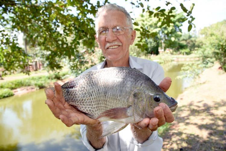 Alta produção de proteína por área e demanda por consumo são atrativos da piscicultura em MS