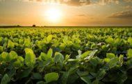 Vazio sanitário chega ao fim no dia 15 de setembro e abre temporada da soja em MS