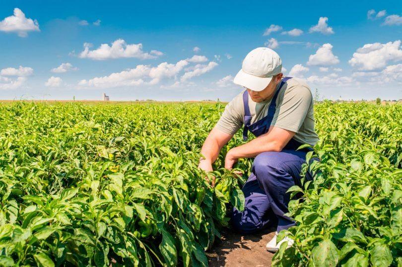 Agronegócio emprega mais no segundo trimestre de 2019