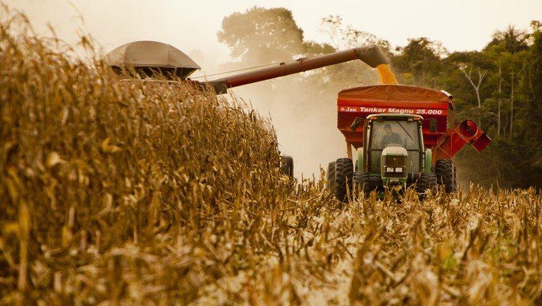 Safra de milho do Brasil estimada em recorde, na torcida por chuvas para soja