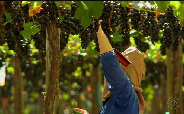 Arábia Saudita abre mercado para castanhas e derivados de ovos do Brasil e promete ampliar compra de frutas