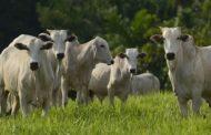 VBP da agropecuária de deve atingir R$ 601,9 bilhões