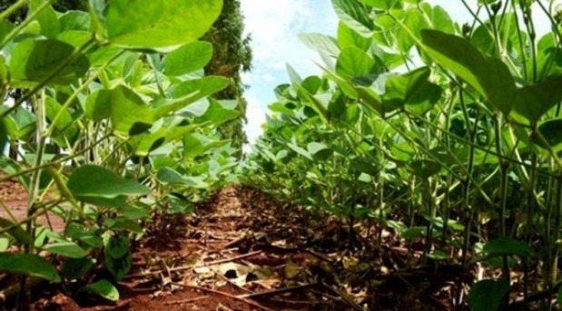 Banco do Brasil reabre financiamentos por meio do FCO Rural em MS