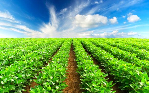 Sustentado pela pecuária PIB agro sobe 0,12%