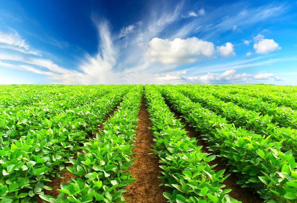 CNA propõe medidas de proteção ao produtor rural