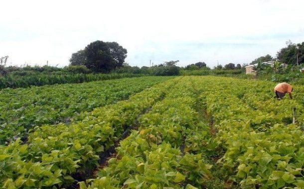 Garantia-Safra paga R$ 442,4 mi para cerca de 520 mil agricultores